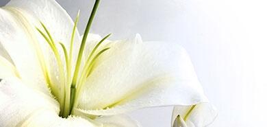 Cveće za moju mamu