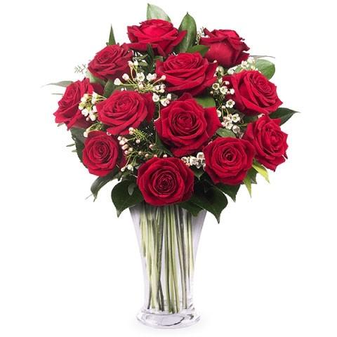 12 Crvenih ruža Juzna Afrika