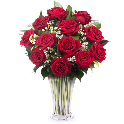 12 red roses-singapore