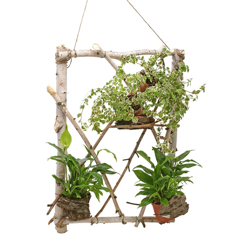Pogled kroz biljni prozor