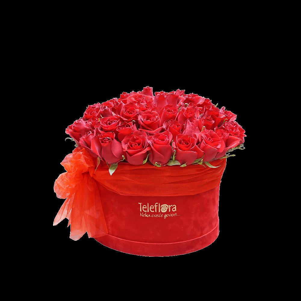 Ruže Oooolaalaaa
