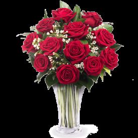 12 crvenih ruža-Dominikana