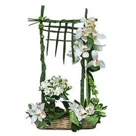 Govor orhideje