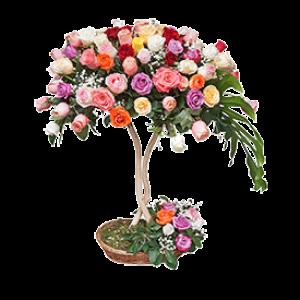 101 Šarena ruža