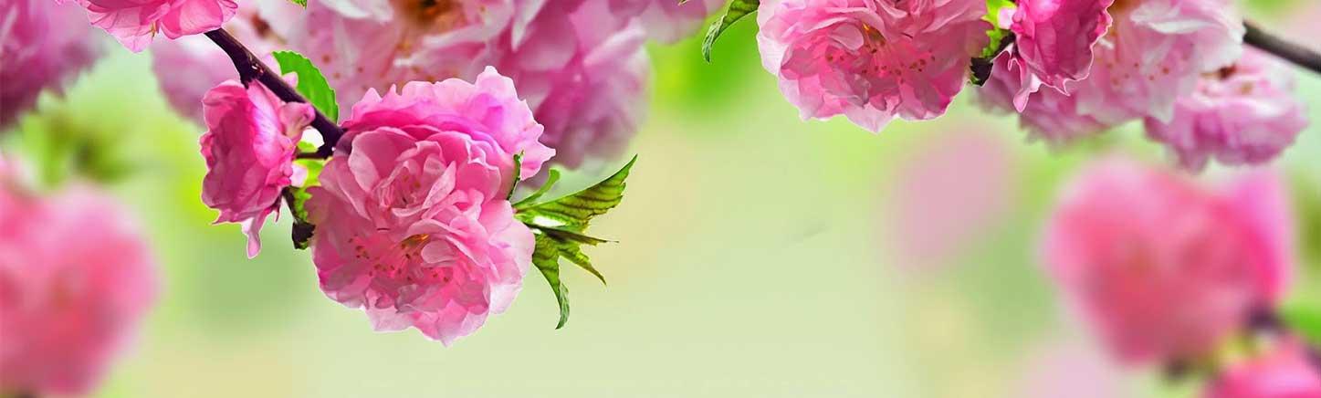 Naručiti cveće